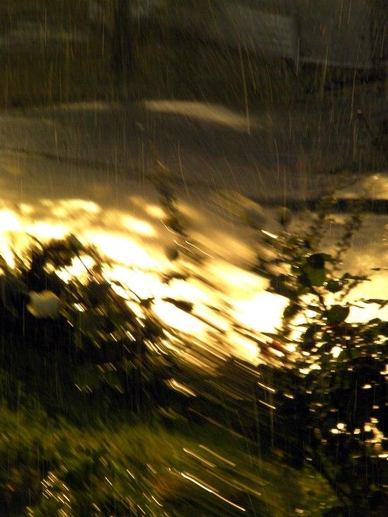 rainrose