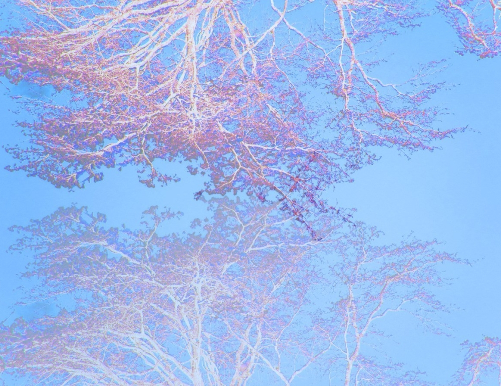 treepinks-e1519324964786.jpg